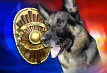 volusia county k-9 shot, police dog shot, deland, daytona,
