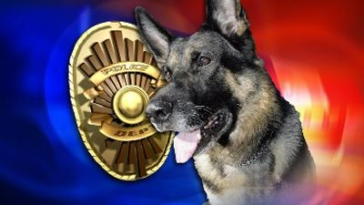 volusia county k-9 shot, police dog shot, deland, daytona,