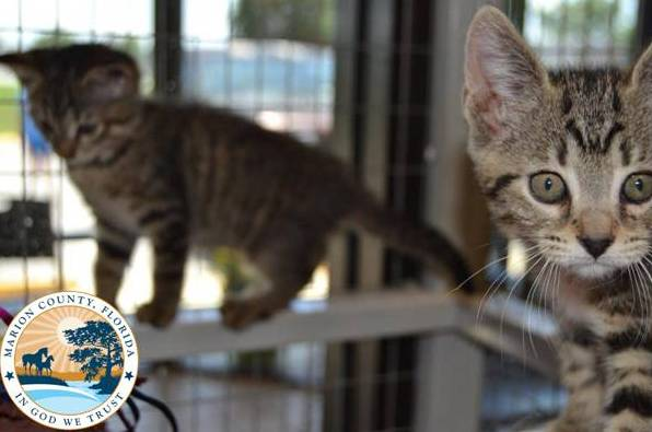 animal control marion county, animal services, ocala news, marion county news