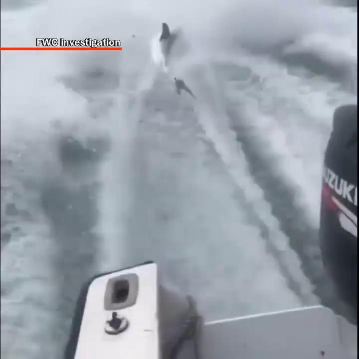Shark dragged behind boat, investigation underway