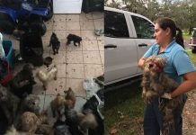 56 dogs, animal cruelty, ocala news, ocala post, marion county news,