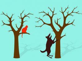 barking up the wrong tree, ocala post, ocala news