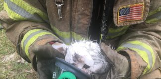 Firefighters save cats from mobile home fire