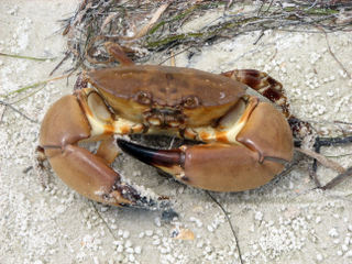 Stone crab season closed
