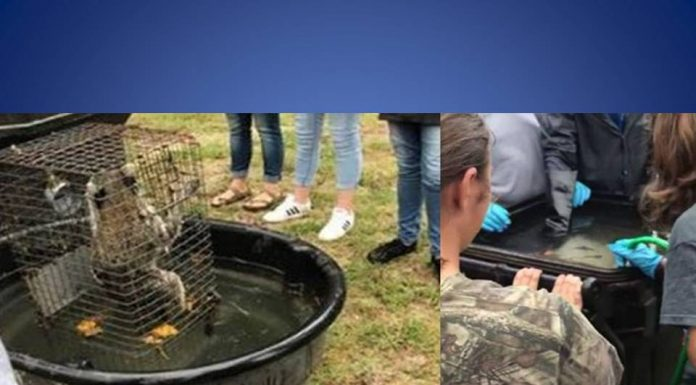forest high school, raccoon drown, teacher drown animals