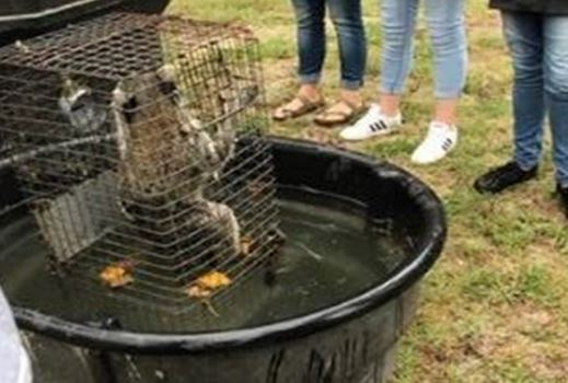 raccoon, forest high school, drown raccoon