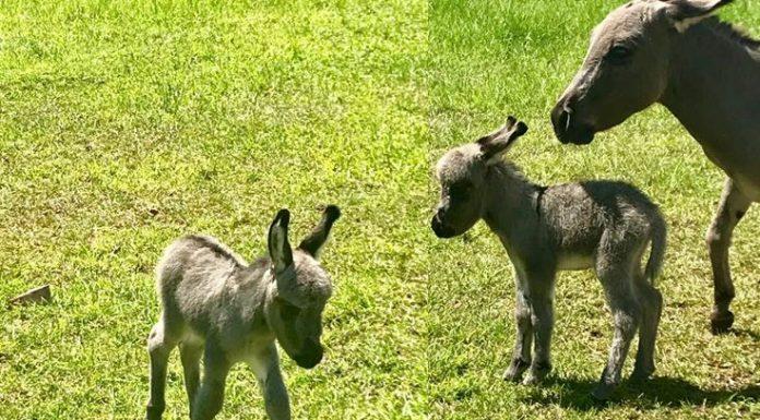 baby donkey, ocala news, ocala post, donkey stolen