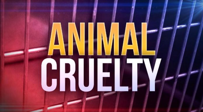 animal abuse, florida, ocala news, ocala post, new laws