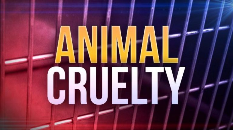 New law for those who abuse animals