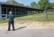 horse farm shooting, ocala news, ocala post