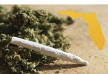 marijuana florida, legalization, ocala post, ocala news