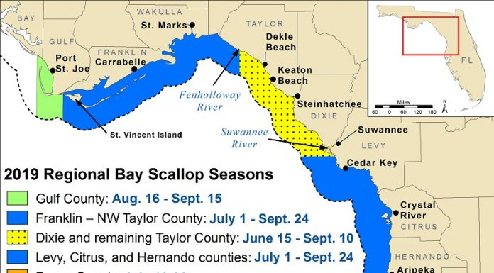 scallop season 2019, crystal river