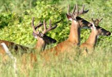 deer hunting, ocala news, ocala post, hunting