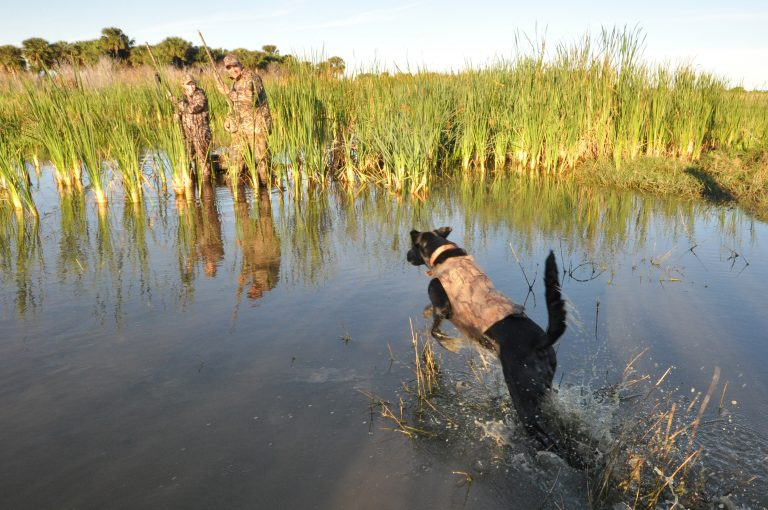 Duck hunters should be aware of changes in the law