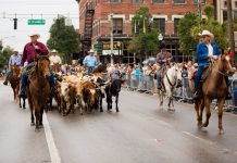 Cattle Drive, ocala-news, ocala post