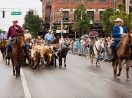 Cattle Drive, ocala-news, ocala post