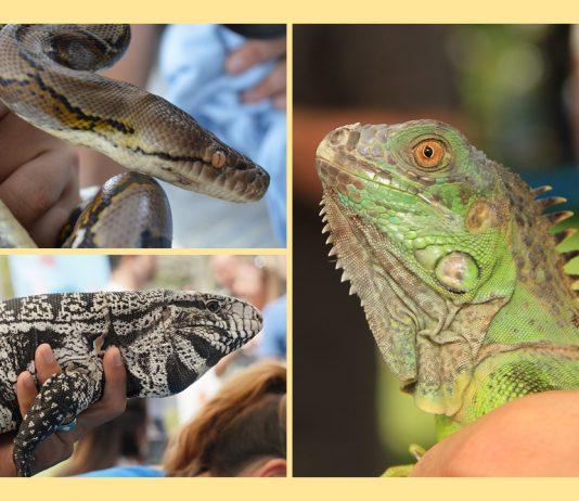 exotic pets amnesty day, ocala news, ocala post