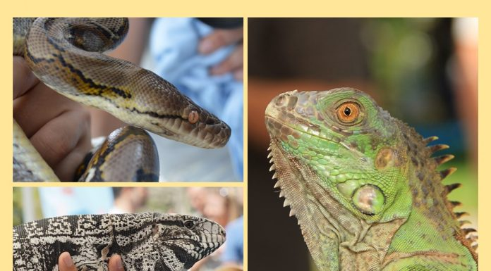 exotic pets amnesty day, ocala news, ocala post