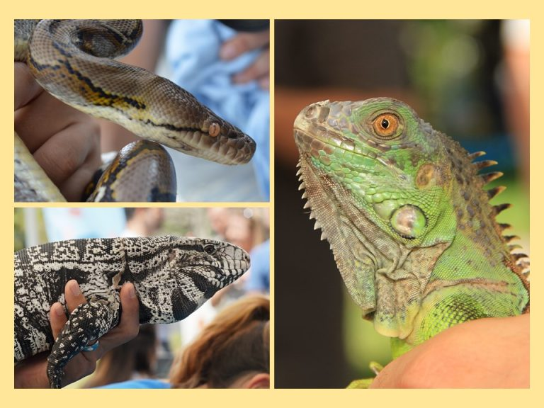 FWC will help find home for your unwanted exotic pets