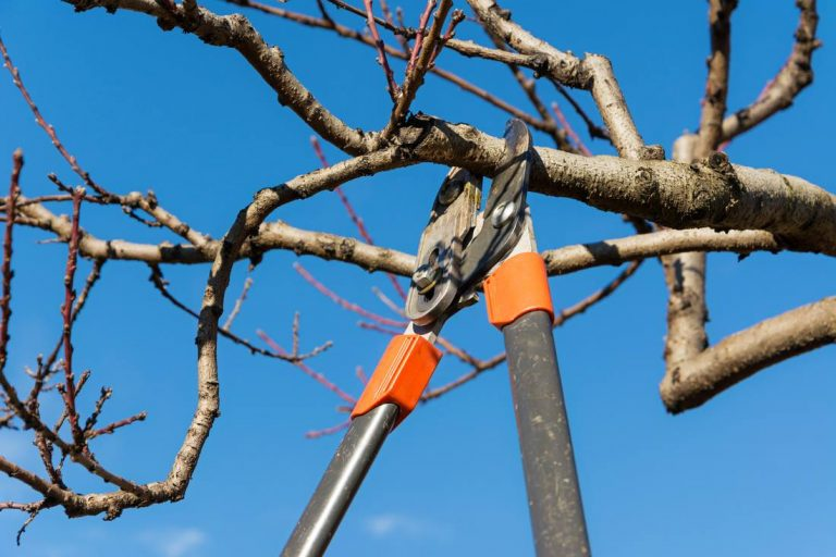 AGM Tree Service says they are hiring, but tired of lame excuses