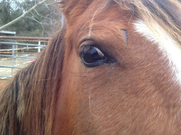 Horse found slaughtered in Summerfield