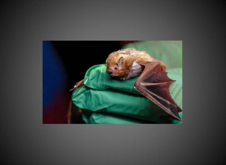 Bat tests positive for rabies in Micanopy area