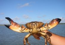 stone crab regulations, ocala news, ocala post