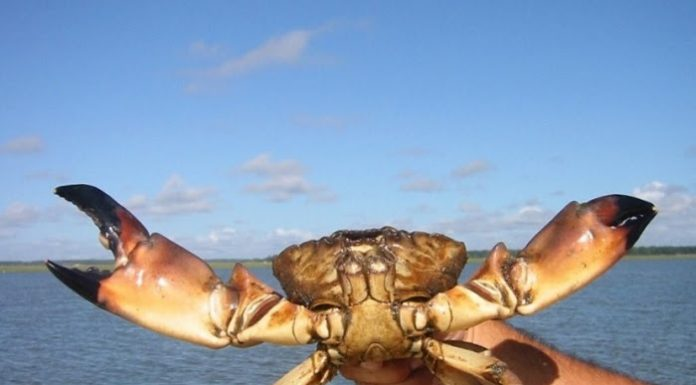 stone crab regulations, ocala news, ocala post