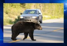 ocala news, ocala post, bears, motorcycle crash
