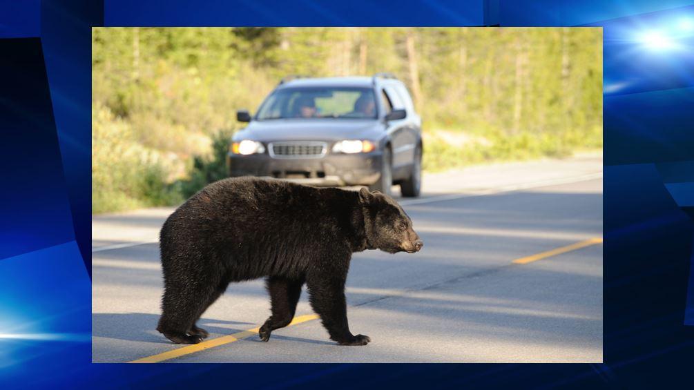 ocala news, ocala post, bears, motorcycle crash