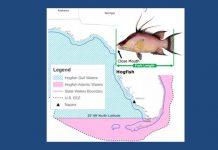 hogfish, florida fishing
